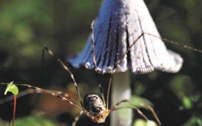 The globe-trotting fungus lover