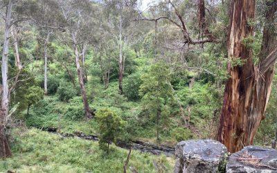 Deep Creek: a visit in Nov – and a bird walk on Jan 9 2021
