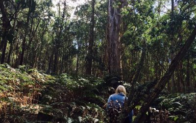 Wombat forest explorations part II: Allens Creek Rd and Chettle Rd