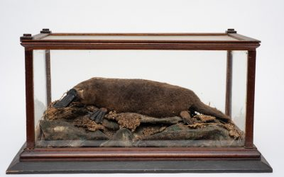 Reflections: Loos on Platypus