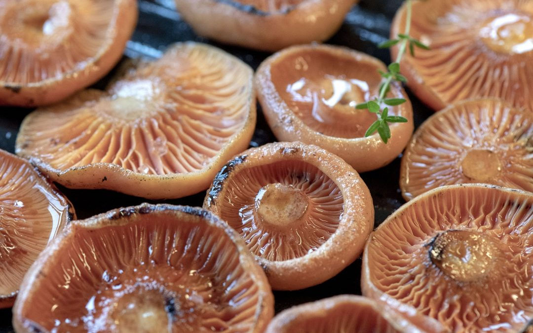 Wild Mushrooming: a guide for foragers book review